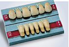 Samples of Teeth for Dentures